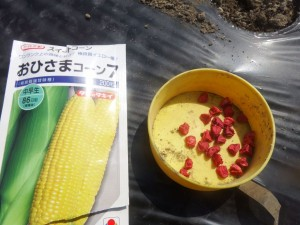 s-04-1トウモロコシ種