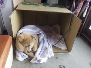 s-06-4簡易犬小屋