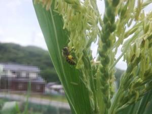 s-02-1蜜を抱えた蜂'