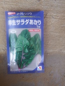 s-ほうれん草「サラダあかり」表