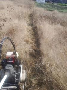 s-02-3草刈り跡