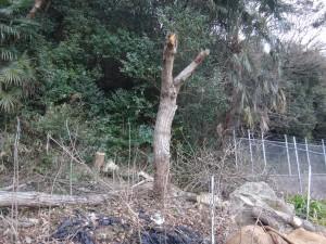 s-08無くなった木