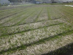 s-03-1大量の雑草